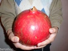 50 Fresh Seeds From Rare Giant Pomegranate Sweet Israeli Rimon 1.2Kg/2.6Lb רימון