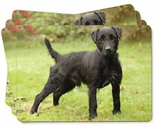 Fell Terrier Dog Picture Placemats in Gift Box, AD-FT1P