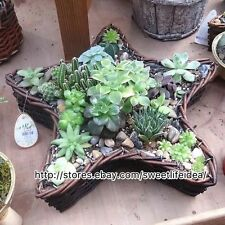 Rattan Woven Star Cacti Succulent Plant Pot Flower Planter Mini Garden Design