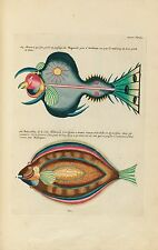 100 colour plates of fish, crayfish and crabs of an antique book (1754) on 1 DVD