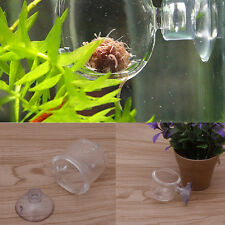 Aquarium Pinhole Glass Pot Plant Cup Holder Shrimp Fish Tank Aquatic Feeder