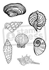 A7 'Assorted Beach Shells' Unmounted Rubber Stamp (SP004566)