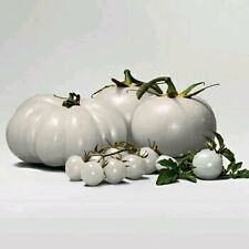Rare WHITE Tomato Seeds Very Tasty Nutritive Heath Vegetables 30 Seeds