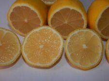 15 Pcs valle lemon Tree Indoor Outdoor Fruit Seeds Love Garde