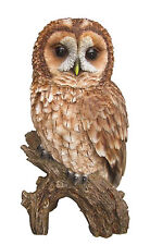 Vivid Arts - REAL LIFE BIRDS - Tawny Owl