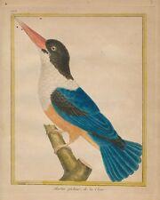 FRANCOIS MARTINET BUFFON 1770 Hand Col Engraving Hist. Nat. #673 Kingfisher Euro