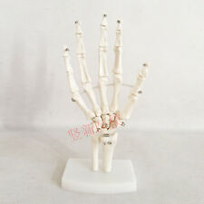 1:1 Human Anatomical Bones Joints of Hand Ulna Radius Skeleton Medical Model 74