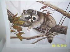 JIM OLIVER /WILDLIFE,RACOON