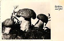 Neujahr, Pilze, 1954