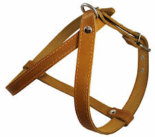 """Genuine Leather Dog Harness 1"""" wide, 21""""-25"""" chest  for Medium Breeds"""