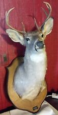 WHITETAIL DEER 8 POINT HEAD SHOULDER MOUNT BUCK TAXIDERMY MOUNTED