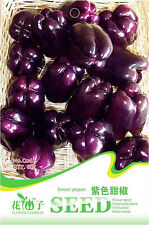 1 Pack 8 Purple Sweet Pepper Seeds Capsicum Paprika Organic C062
