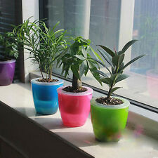 Creative Self-watering Flower Cup Desktop Self-Watering Planter Decor Flower Pot