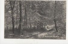 The Woods At Wendover 1913 Postcard 913a