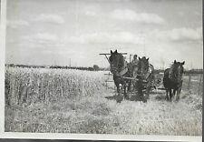 PHOTO DE PRESSE FULGUR + 1942 + AGRICULTURE - MOISSON + ATTELAGE de 3 CHEVAUX