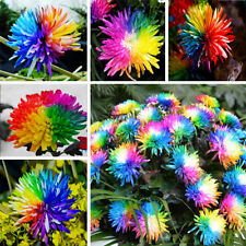Wholesale 100Pcs Hot Charm Colorful Rare Special Chrysanthemum Flower Seeds