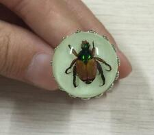 Real bug natural insect in resin ring luminous jewelry finger ring NG