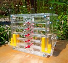 Ant farm AFK-8.1. New educational formicarium for LIVE ants.