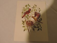Print By Patrick Costello. Birds Nest Red Robin  1978