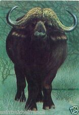 CALENDRIER DE POCHE POCKET CALENDAR BULGARIA 1979 African Cape buffalo  Animal