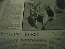 magazine item - 1960s zoo stars battling bonzo whipsnade zoo kangaroo