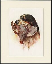 ENGLISH SETTER HEAD STUDY DOG WITH BIRD ART PRINT MOUNTED READY TO FRAME