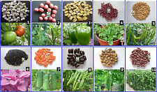 Hybrid Vegetable Seed Kit - 1 for Kitchen Terrace Poly House Gardening 10 Items