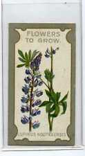 (Ja7891-100)  Lea,Flowers To Grow,Lupinus Nootkaensis,1913#8