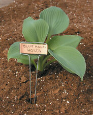"RAPITEST COPPER GARDEN PLANT FLOWER 10"" LABEL STAKES MARKERS 25 PACK WITH PEN"