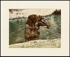GERMAN WIREHAIRED POINTER RETRIEVING MALLARD DOG PRINT MOUNTED READY TO FRAME
