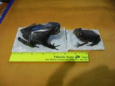 Taxidermy TOAD & FROG  RARE 2 SPECIES FULL DISPLAY FREEZE DRY SPECIMENS