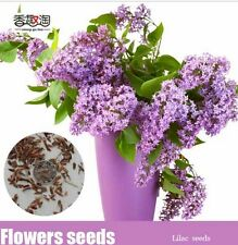 100pcs Lilac Flower Tree Seeds, Flower Shrub Bush Seeds, Garden Aromatic Plant