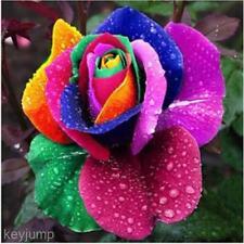 Multicolore 200 pz Arcobaleno Rosa Semi Di Fiori Piante Da Giardino