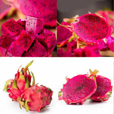 20Pcs Red Pulp Dragon Fruit Seeds Hylocereus Pitaya Bulk Seeds Yard Bonsai DIY