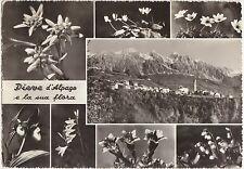 PIEVE D'ALPAGO E LA SUA FLORA - VEDUTINA E FIORI (BELLUNO) 1963