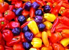CAPSICUM Heirloom Mix' 20 seeds MIXED VARIETIES heritage vegetable garden NON GM