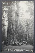 Redwood Forest - Father Tree - US Postcard 1925 AK Postkarte 2c AK (Lot A3881