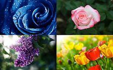 Más De 2000 Flor imágenes todos alta resolución para hacer la tarjeta, Decoupage, T Shirts En Dvd