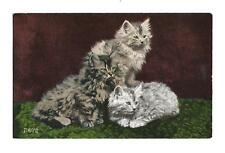 Vintage Cat Postcard Three Fluffy Long Haired Kittens