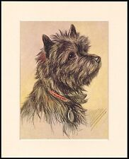CAIRN TERRIER HEAD STUDY LOVELY MOUNTED DOG PRINT READY TO FRAME