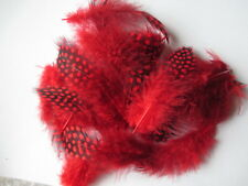 Wholesale ! 20-100 pcs beautiful guinea fowl feathers 6-10 cm /2.5-4 inch