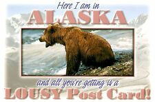 Alaska Bear Postcard You're Getting a Lousy Post Card! Funny Water Mountains New