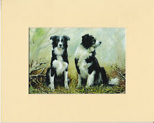 """MOUNTED  8"""" x  10"""" OIL PAINTING PRINT of  the  BORDER COLLIE   STUDY"""