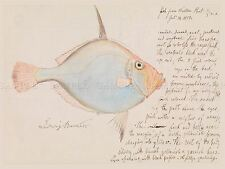 PAINTING BIOLOGY BECKER SILVER DORY FISH WITH NOTES ART PRINT POSTER LF286