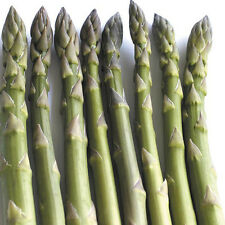 Asparagus Seeds - PACIFIC 2000 - Gmo Free Hardy Variety - Delicious - 20 Seeds