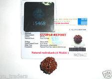 4 Mukhi Rudraksha / Four Mukhi Rudraksh 100 % genuine Lab Certified Nepal Bead