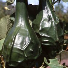Gourd Caveman Vegetable Seeds (Lagenaria siceraria) 15+Seeds