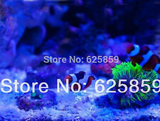 10pcs 10w led 20000k +10pcs Royal blue 445-455nm for aquarium light 45mil