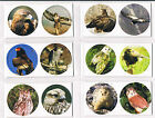 UNKNOWN CIRCULAR POP OUT TRADE CARD BRITISH BIRDS OF PREY 1-20 MINT CONDITION