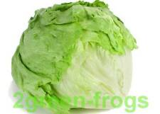 Heirloom Iceberg Lettuce 200++ Seeds Approx  ** AUSSIE SELLER